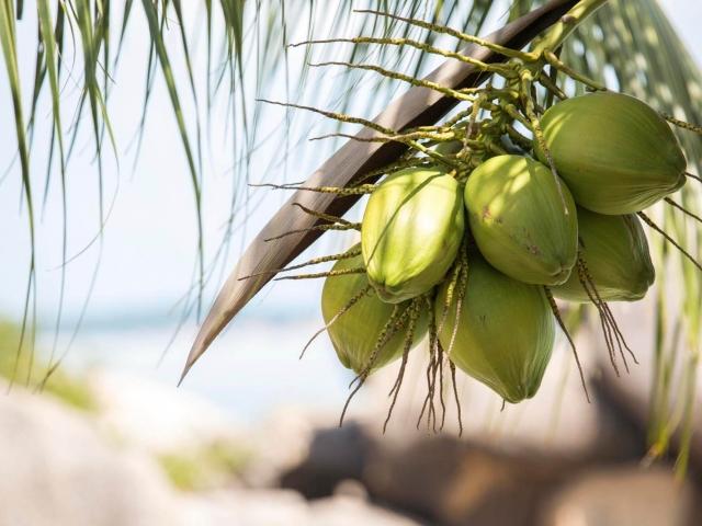 Crystal Bay Beach Resort Beach Front Deluxe 16